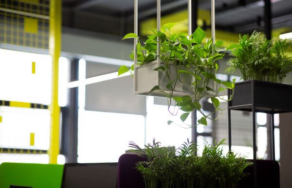 ENVATO potted-green-plants-over-blurred-background-with-c-25EZEDN