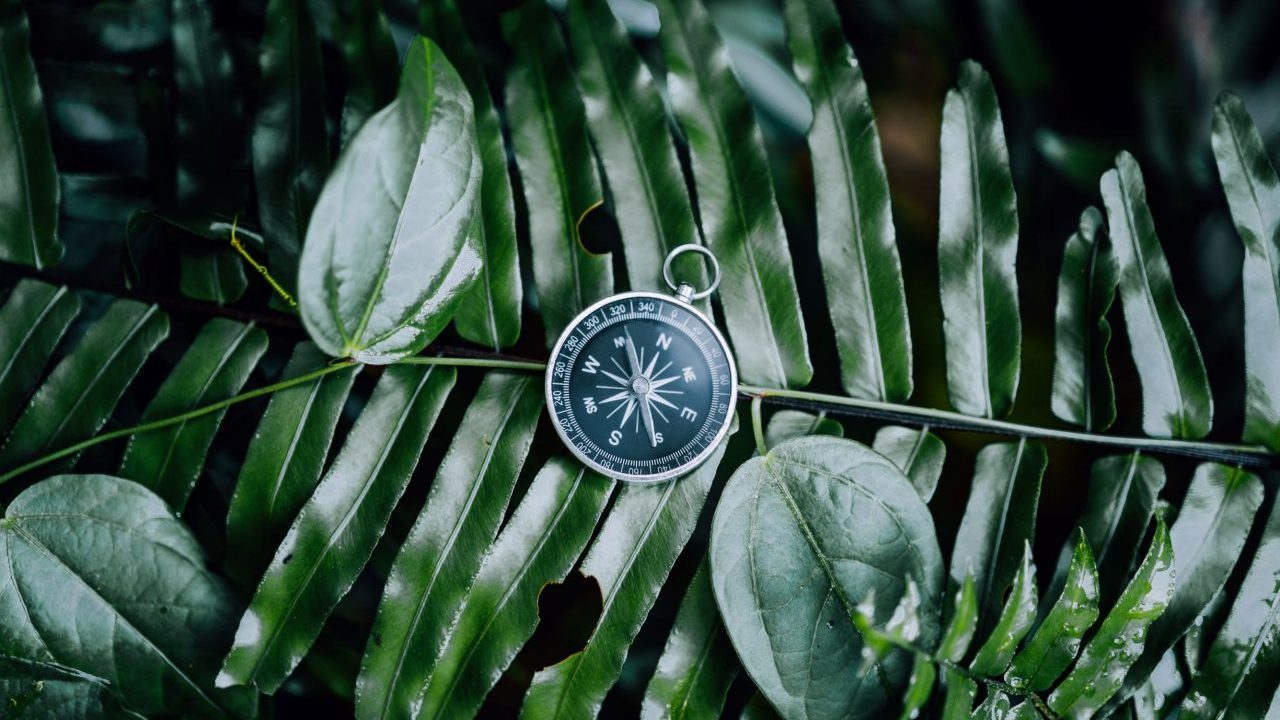 compass-among-fern-leaves-in-a-tropical-jungle-adv-ZR3KKCM