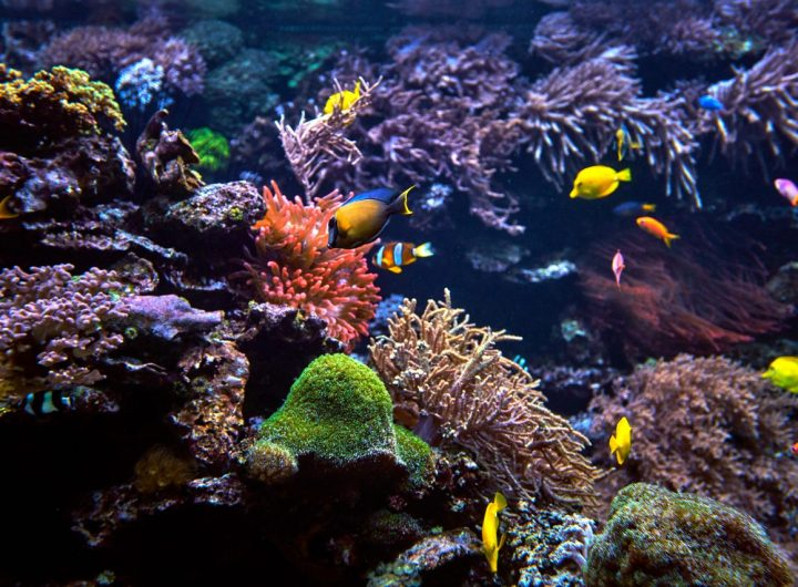 tropical-fish-on-a-coral-reef-P2S7VSX