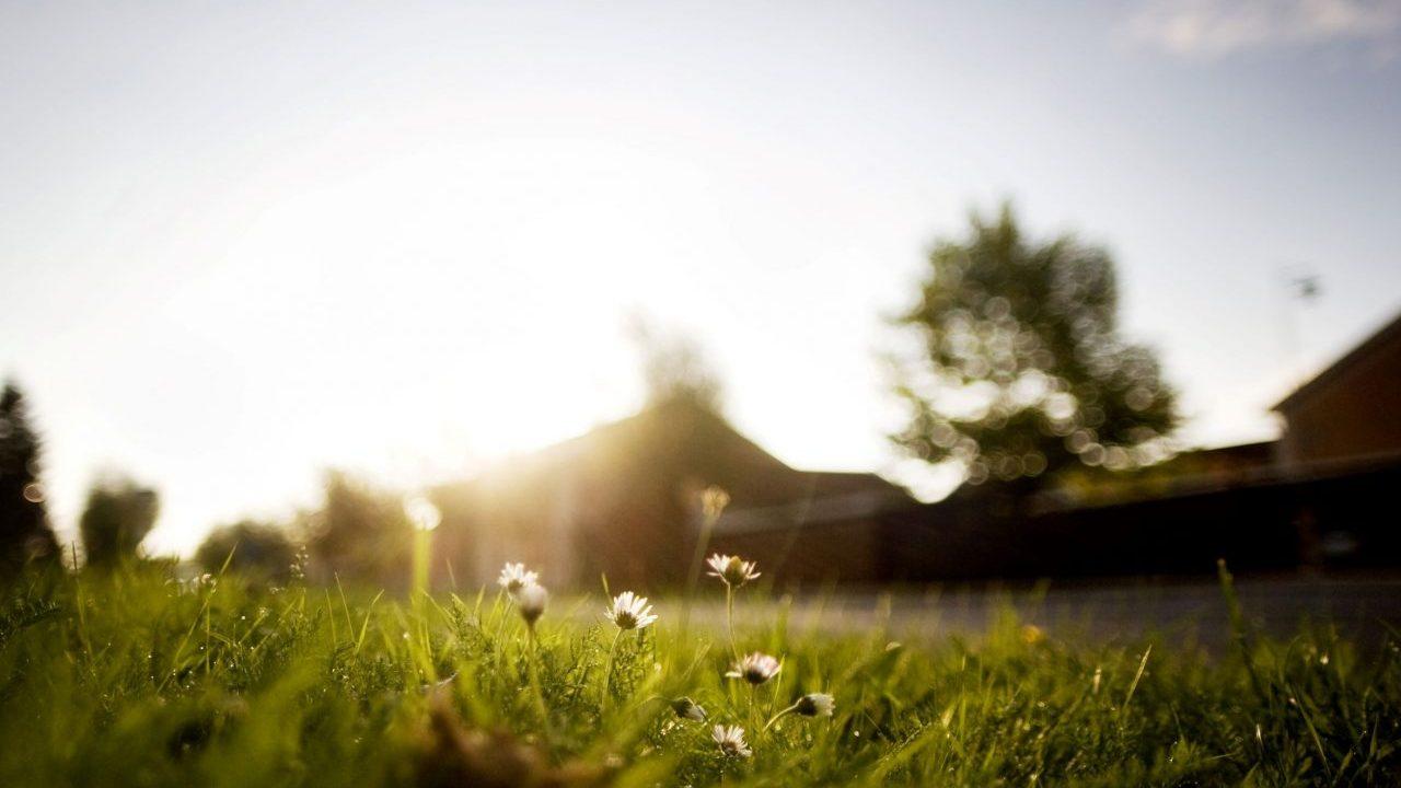 flowers-growing-on-field-against-sky-EUKMP4E