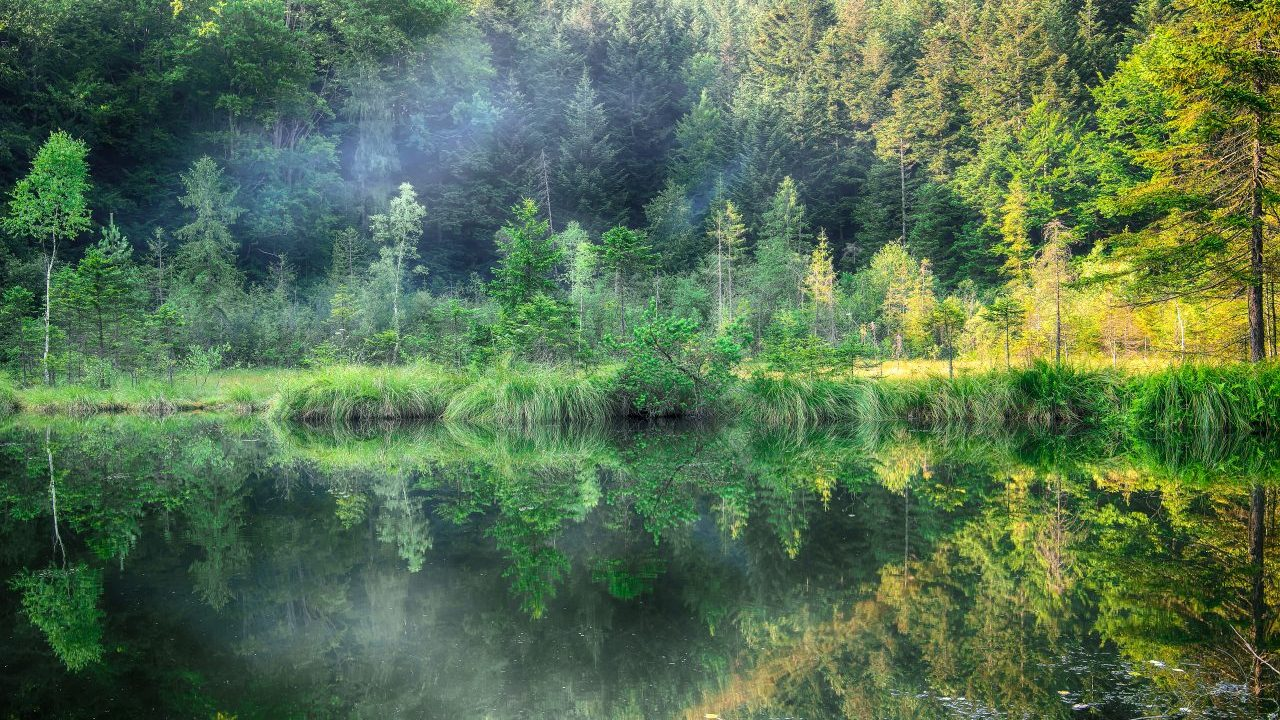 green-forest-dramatic-sky-meadow-and-reflection-in-KXSQFRH