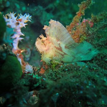 thriving-coral-reef-alive-with-marine-life-and-fis-5J76928