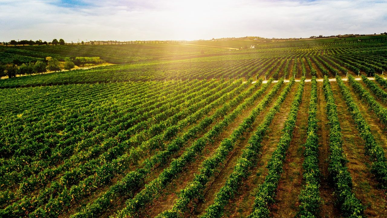 aerial-view-of-beautiful-vineyard-landscape-in-gre-2021-04-02-19-46-13-utc