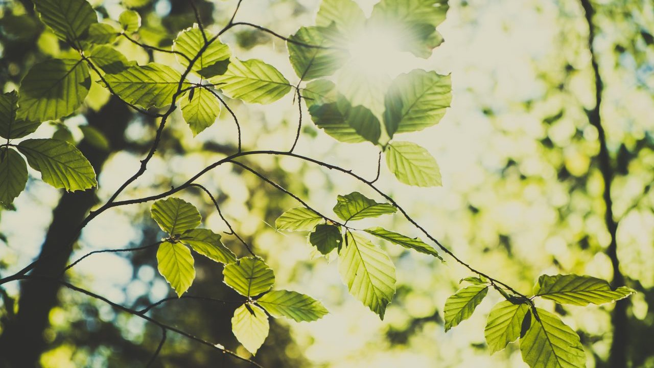 green-leaves-and-sunlight-2021-04-02-20-03-22-utc