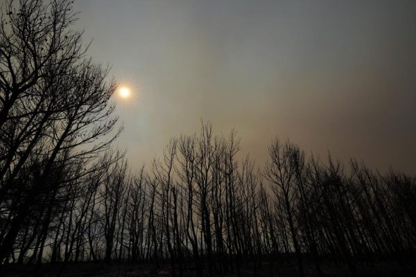 APNEWS.COM  Wildfires rampage in Greek forests, cut large island in half