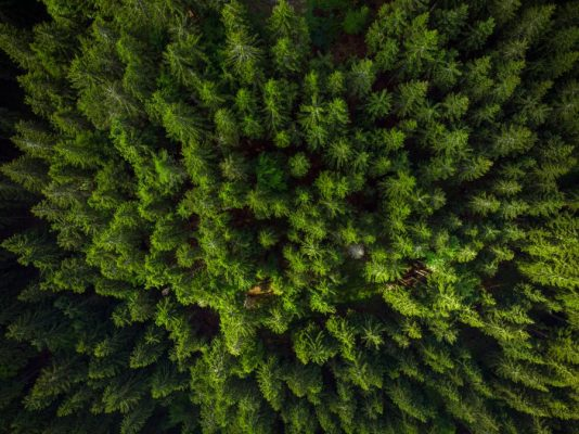 green-forest-birds-eye-view-drone-photo-SKXEW4L