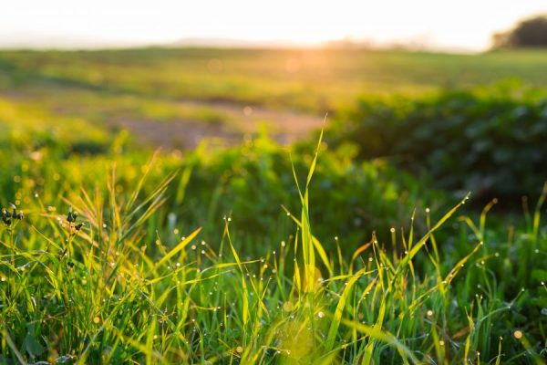 water-drops-on-the-green-grass-close-up-PVX679A