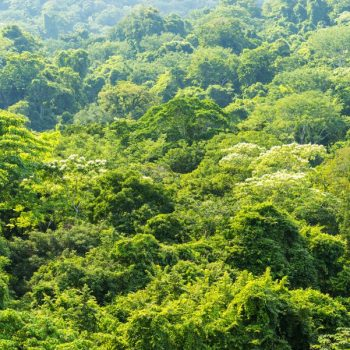 green-forest-nature-background-2021-08-26-15-27-02-utc