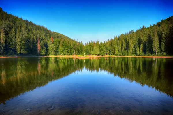 mountain-lake-among-the-green-fir-forest-in-pictur-2021-08-26-16-23-10-utc